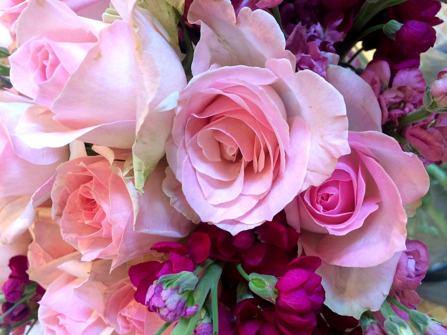 fresh roses for beach clubs and restaurants ibiza